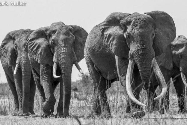 elephant_kenya2